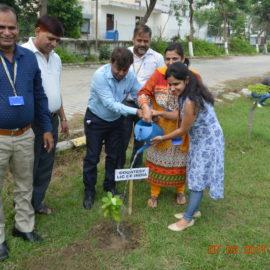 LIC OF INDIA -TREE PLANTATION