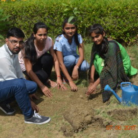 Tree Plantation by Students